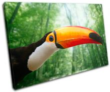 Toucan Bird Animals - 13-1828(00B)-SG32-LO